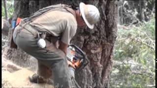 Timber Felling Louse Ck  unit 3