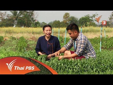 อาชีพทั่วไทย : เกษตรกรรุ่นใหม่เปลี่ยนนาปลูกผักสวนครัวสร้างรายได้เพิ่ม (6 มี.ค. 61)