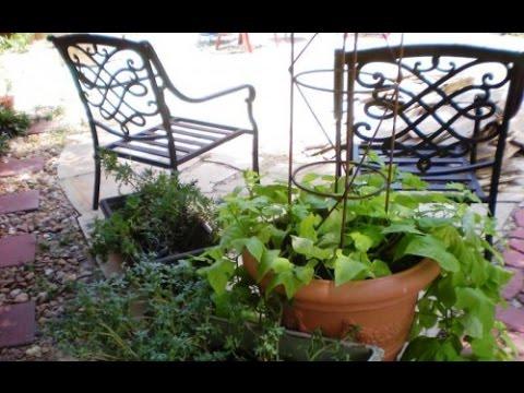 Идеи вашего сада. Несколько советов