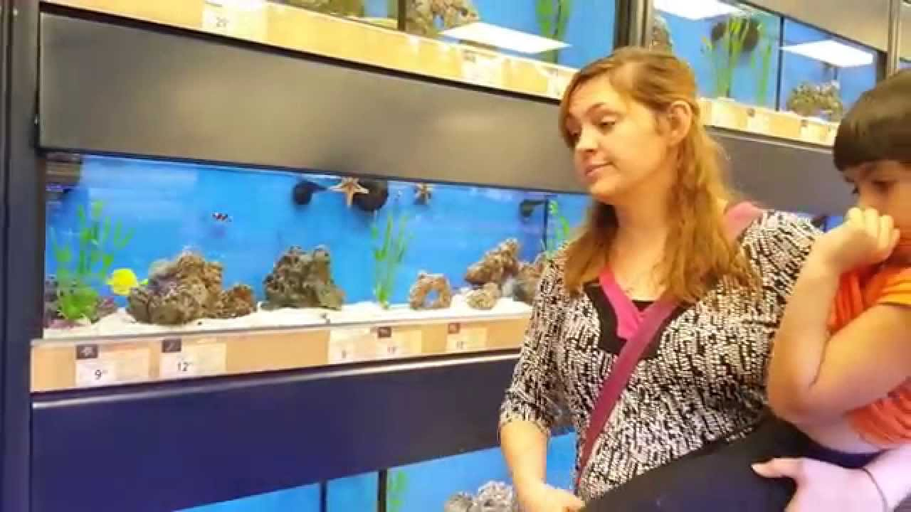 Cool starfish and ocean fish at the pet store with for The fish store