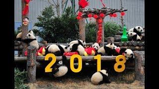 Какой он, китайский Новый год