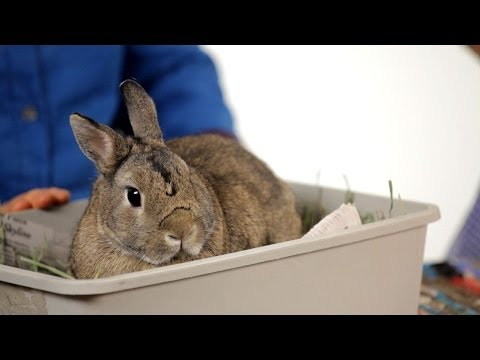 Can You Keep a Wild Rabbit as a Pet? | Pet Rabbits