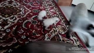 Первые шаги котят