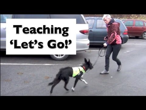 how-to-stop-your-dog-lunging-and-barking--train-'let's-go!'--shy-reactive-dogs