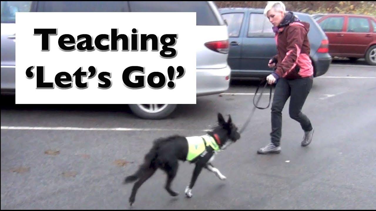 Dog Training Barking Reactive