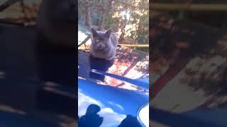Кот который,не умеет писать