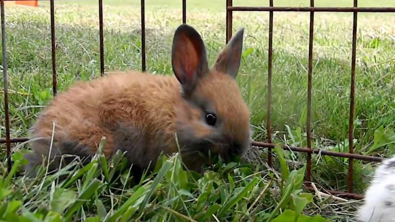 Bunny Rabbits Playing - YouTube