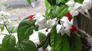 Невеста цветок