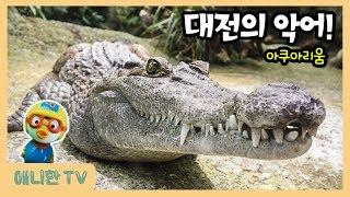 대전의 무시무시한 악어를 만나다! ♥ 대전 아쿠아리움 …