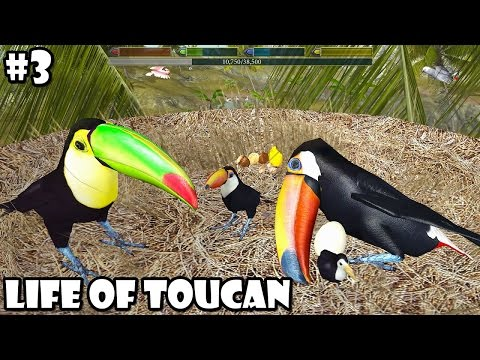 Ultimate Bird Simulator - Life of Toucan -  Android/iOS - Gameplay Part 3