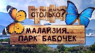 видео Парк бабочек
