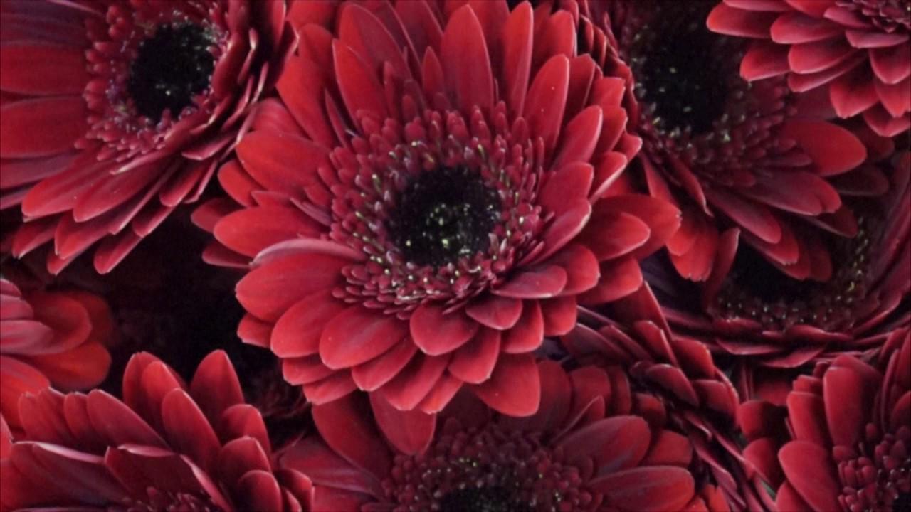 Широкий ассортимент искусственных цветов, продажа оптом с доставкой по всей россии и странам снг. Декорированием торжеств и офисных помещений, изготовлением ритуальной продукции, мы предлагаем купить искусственные цветы оптом с доставкой из новосибирска в кротчайшие сроки.