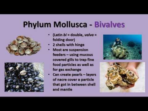 Unit 14 - Annelids, Mollusks, and Arthropods