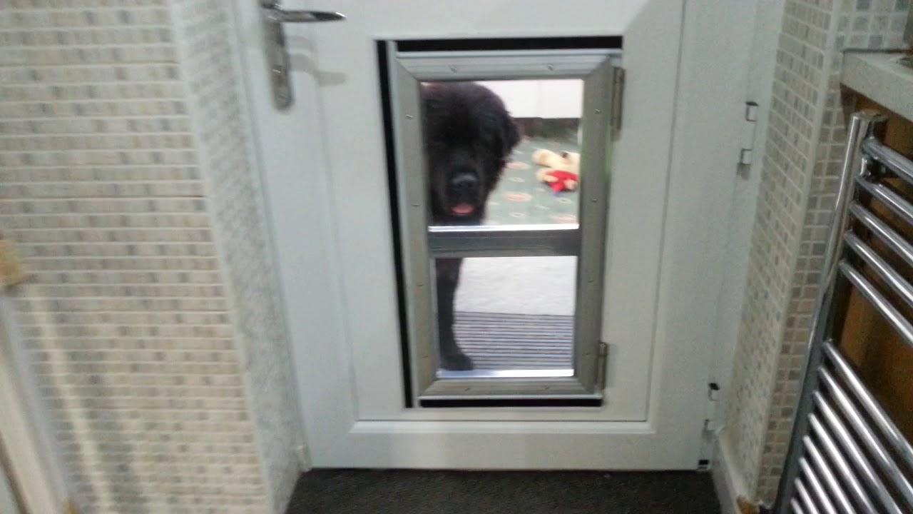 Cafe Style DIY Dog Door - YouTube