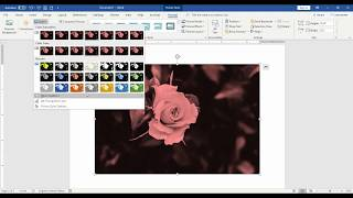 Microsoft Word 2016:How to insert picture and format picture in Tamil