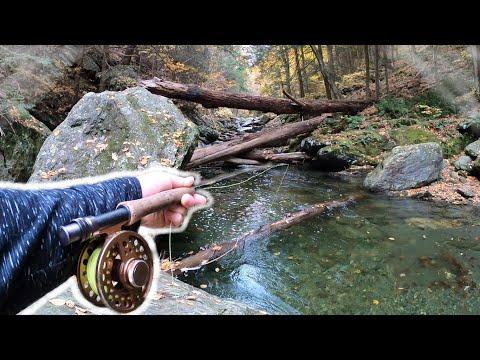 Fly Fishing HEAVEN - Mountain Creek/Wild Brown Trout!
