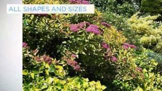 Shrubs: The Foundation of Good Planting