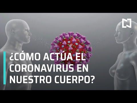Coronavirus: ¿Cómo actúa el COVID-19 en nuestro cuerpo? - Las Noticias