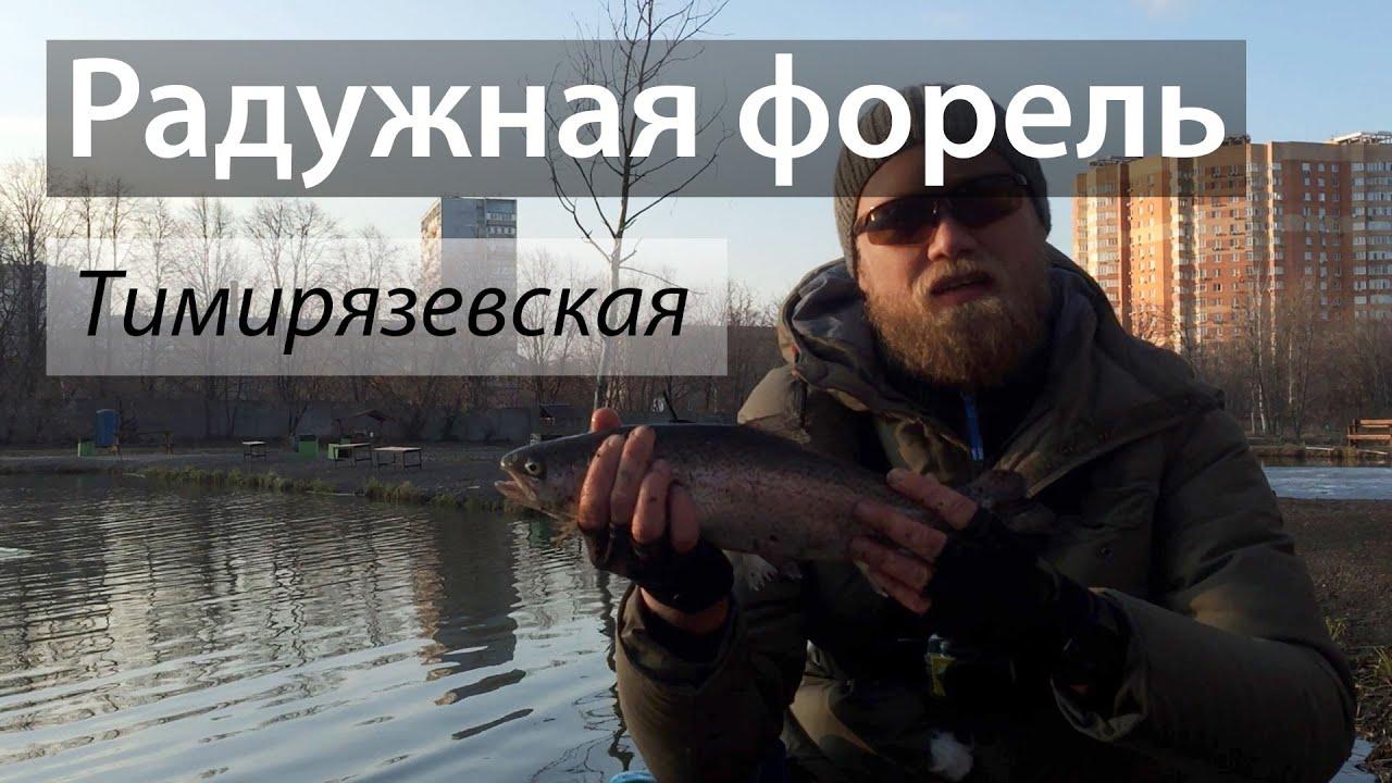 Платник на Тимирязевской, Москва. Форелевый пруд (鱒魚). 2016/04.