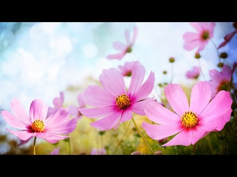 Morning Relaxing Music - Happy and Positive Energy (Diana)
