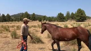 Remi rejoins the herd at Skydog mustang Sanctuary