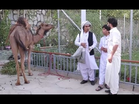 Eid Amad - Episode 02 - TOLO TV / عید آمد - قسمت دوم - طلوع