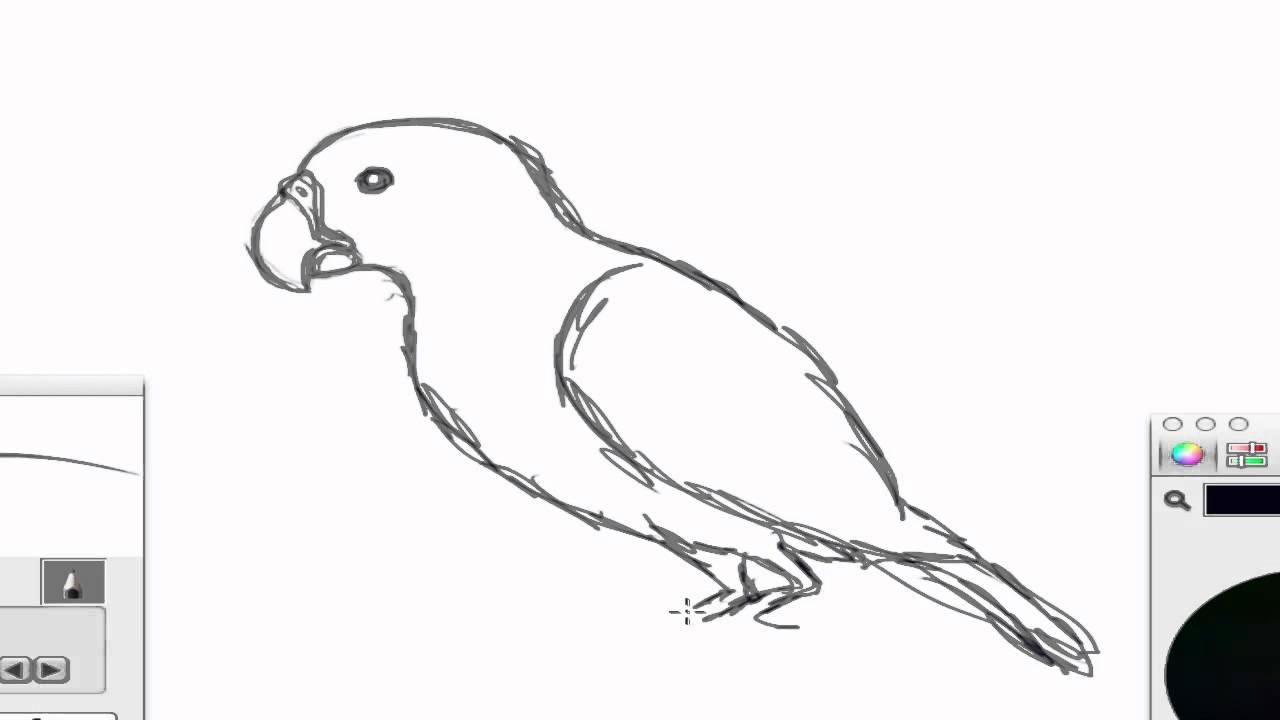 Excepcional Pássaro do bico de papagaio - YouTube MD32