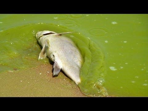 Minnesota - Land of Ten Thousand Toxic Lakes