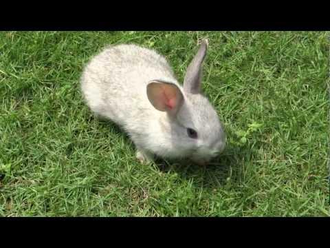 Cute small bunny grazing