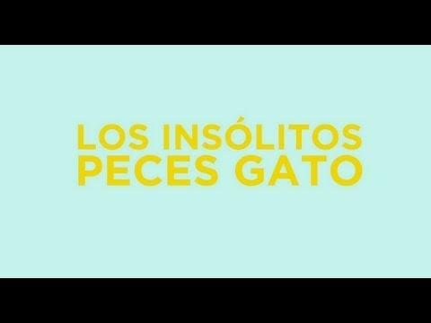 Los Insólitos Peces Gato (The Amazing Cat Fish) - Trailer Oficial Subtitulado