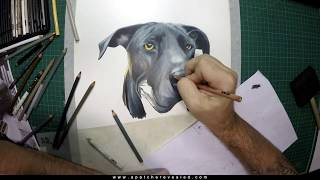 Dog drawing of a great dane, Hank  By Apatche Revealed (Time-lapse)