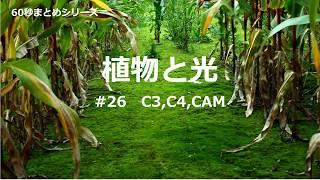 植物と光 #26 C3,C4,CAM