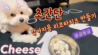 초간단 강아지용 리코타치즈 만들기,비숑 꿀떡이 1:06…