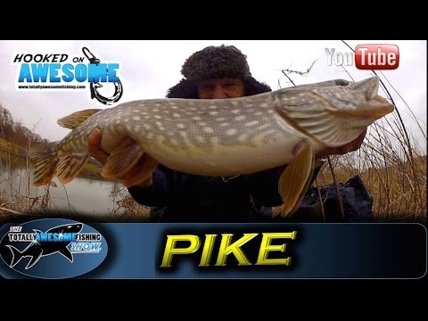 How to catch Pike with a Split Tail Deadbait - TAFishing