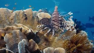 На глубине морской Under the Sea, 2009