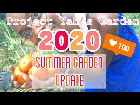Project Yah'sGarden— Summer Garden: Come Spend The Day W. Me! ☀️