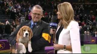 National Westminster Kennel Club 2015-Best-In-Show-Mrs. P