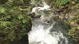 DJI OSMO Mobile 2 - 4K RAW Videotest (iPhone 7) - Lynn Canyon Park, Canada