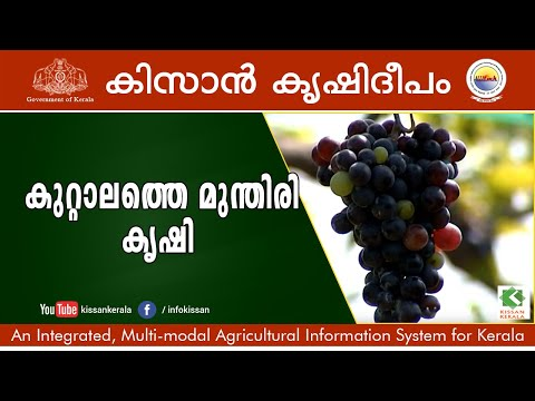 Feature on Organic cultivation of Grapes by Sri. Shaji at Kuttalam - 625