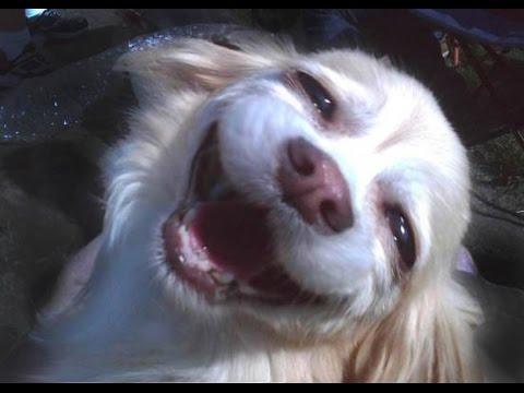 Видео прикол: Собака маленький щенок