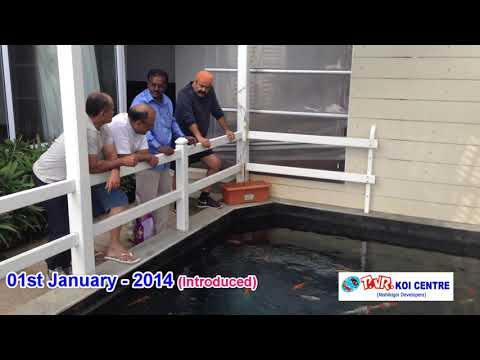 Koi Fishes Delivered To Actor Mr. Mohanlal's Home - Chennai