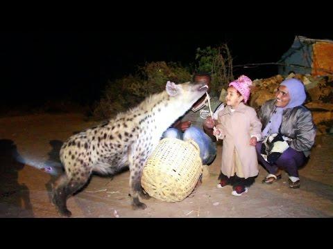 Hyena feeding in Ethiopia becomes tourist attraction