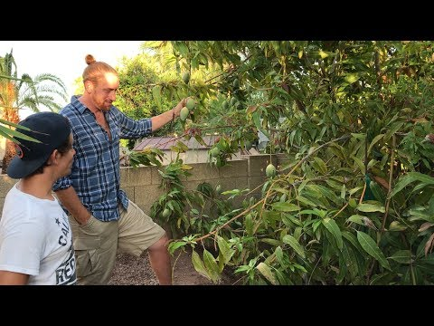 DECADES OLD Food Forest In Phoenix | Tour A Master Gardener's Yard
