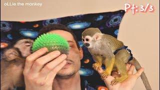 Baby Capuchin/Squirrel Monkey Play date! Pt 3 #MonkeyBooCrew #Cutepet