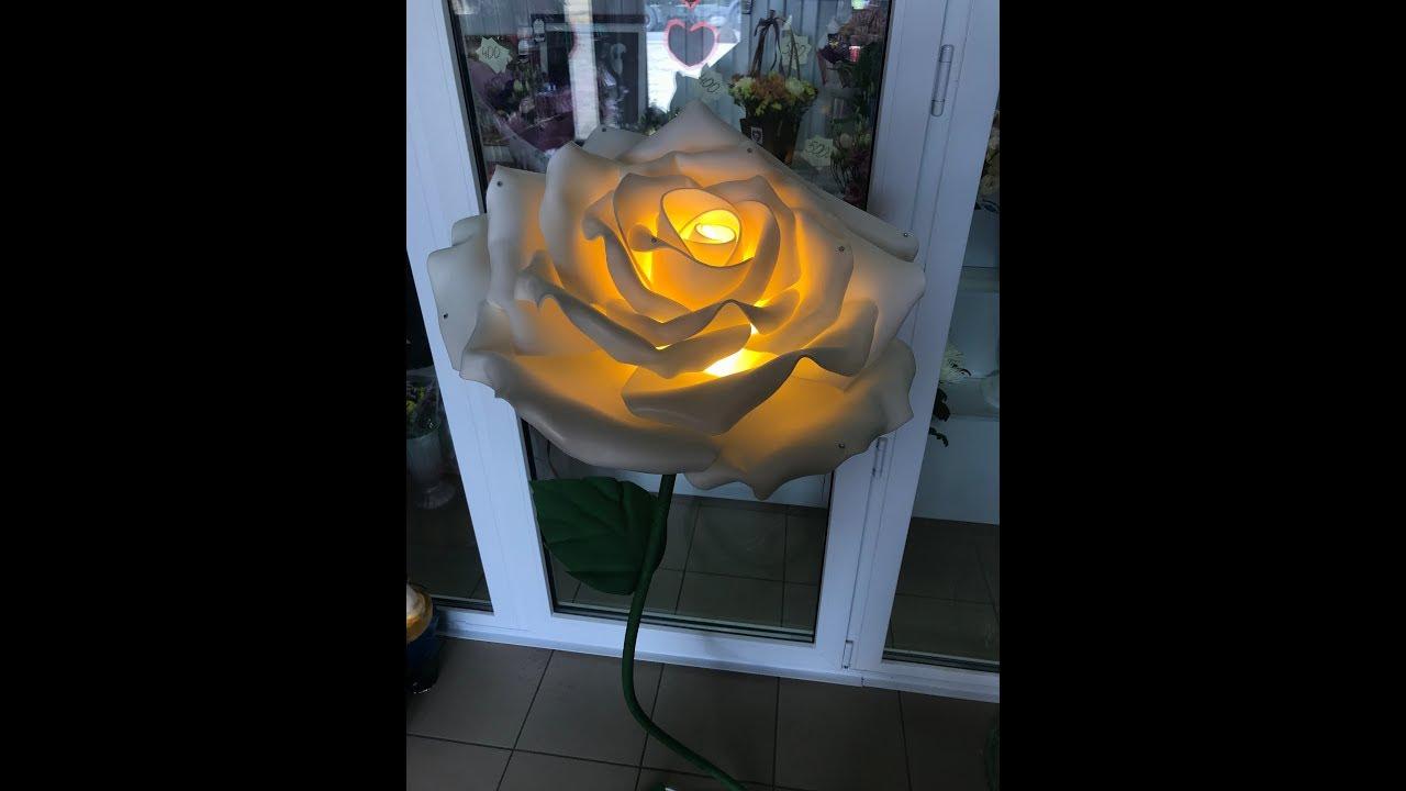 шикарный цветок в горшке фото