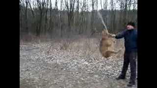 Летающая собака - подготовка к полёту в космос