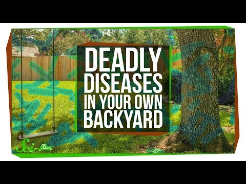 6 Dangerous Diseases Hiding in U.S. Backyards