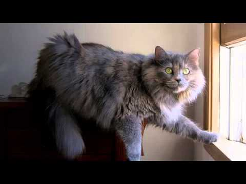 Dry Cat Food For Diabetic Cats