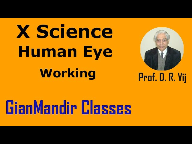 X Science | Human Eye | Working by Amrinder Sir