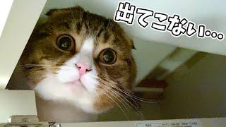 親子猫が新しい隠れ家を見つけて出てこなくなってしまいました…